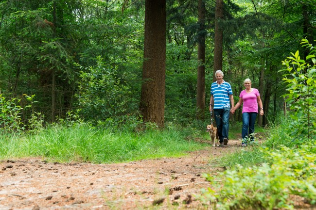 Senior couple walking with dog in nature