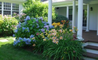 Making Natural Pesticides at Home