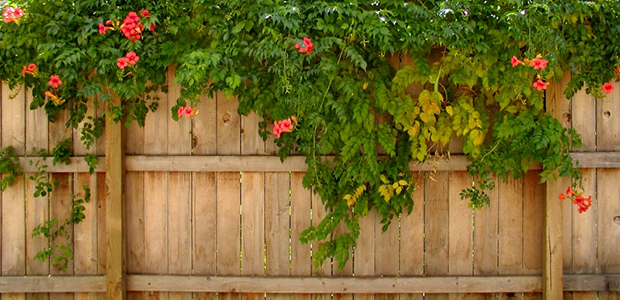 Adding Curb Appeal with New Fencing