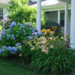 Garden flower bushes