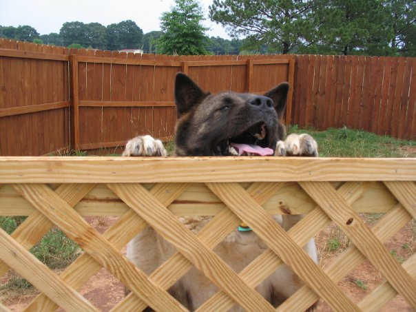 Dog Run Tips Advice On Building A Dog Run