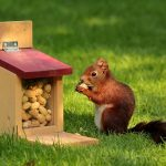 Squirrel munching on nuts