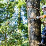 Man wearing harness climbing tree