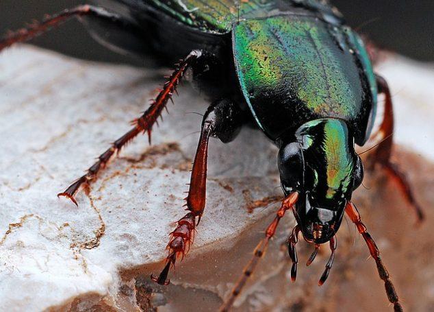 Beetle indoors