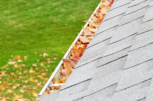 A residential home roof gutter is filled mostly with autumn sugar maple tree leaves. Fallen leaves can also be seen on the ground down below.