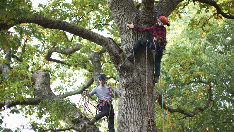 two professional tree service workers