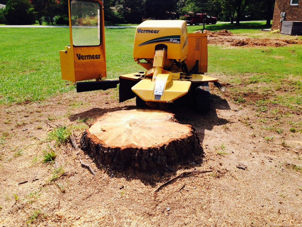 Ways to Remove a Tree Stump