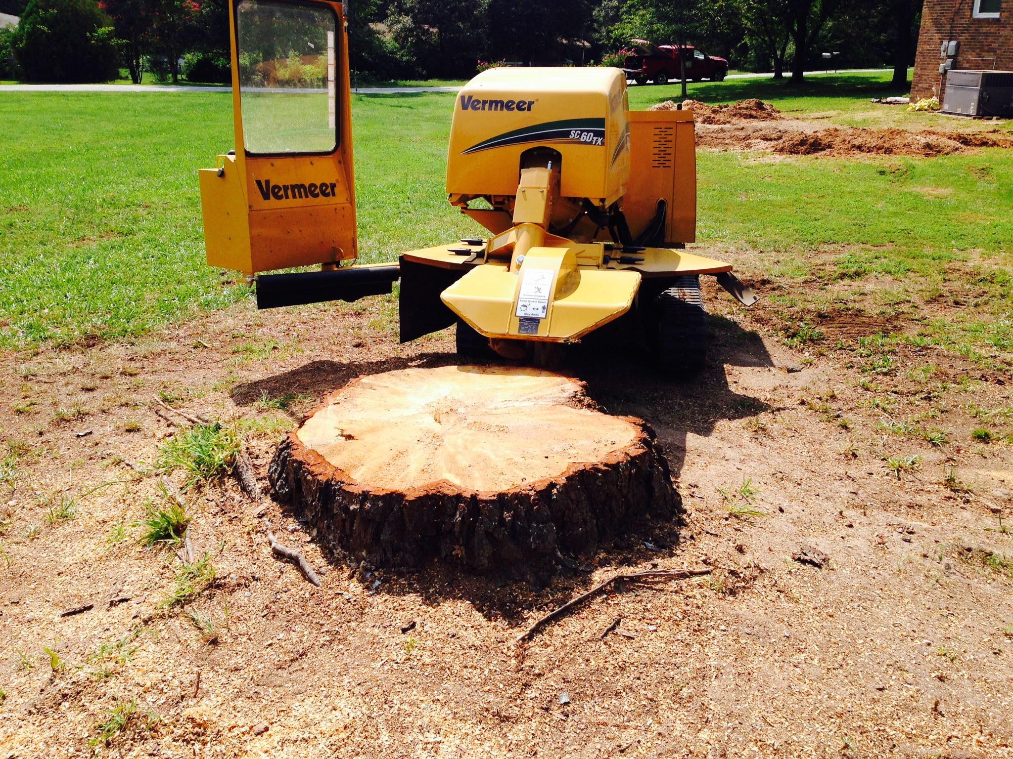 Tree Stump Removal Methods Tips Homeadvisor