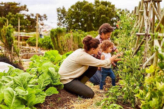 Organic Pest Control Tips Methods Of Organic Bug Control