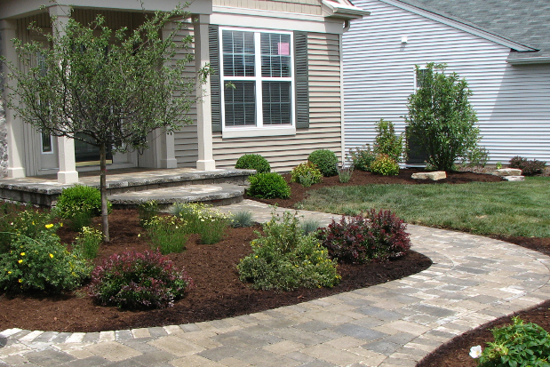 Ornamental trees and plants plant types care arborists for Ornamental grass front yard