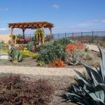 X-Rated Yards: Xeriscaping Conserves Your Energy