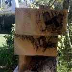 Dry Rotted Wood