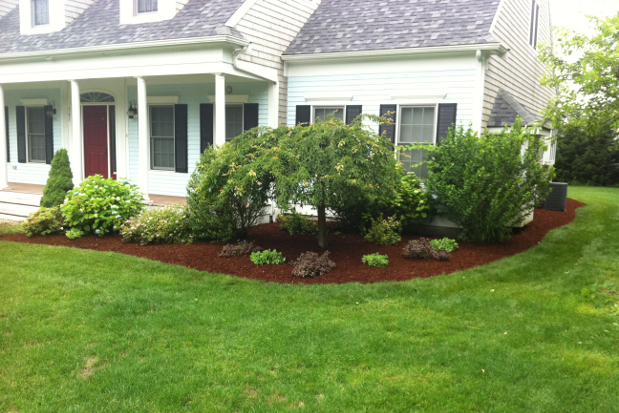 Tree shrub service bushes hedges planting pruning cost for How to plant bushes in front of house