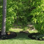 Mature Trees Planted in Yard