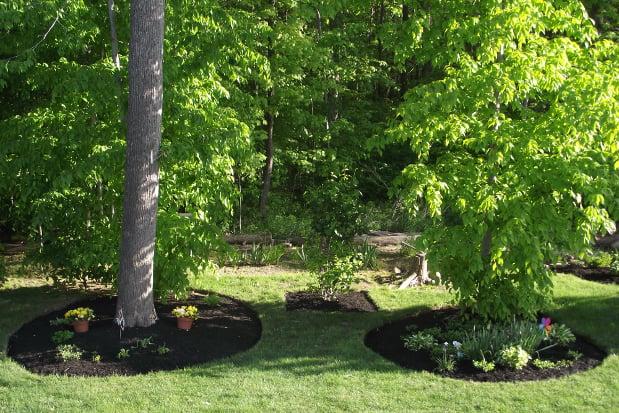 Planting A Mature Tree 36