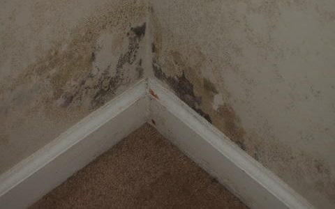 basement mildew from moisture, humidity