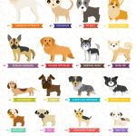 Most popular breeds in the US