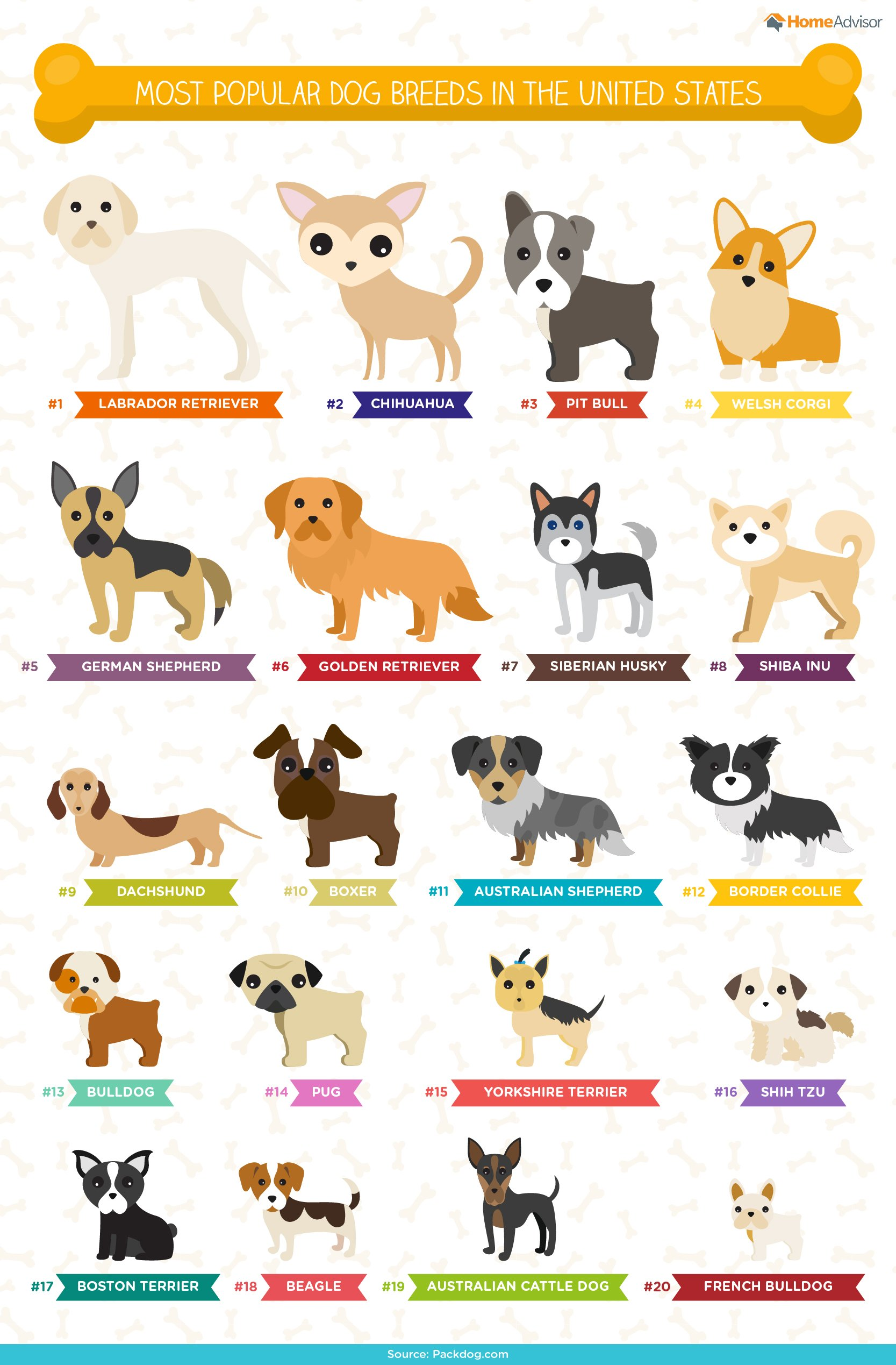 Top 10 dog breeds - Most popular dog breeds in