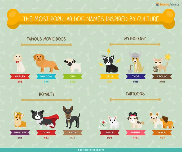 The Ultimate List Of Popular Dog Names Breeds Infographic By