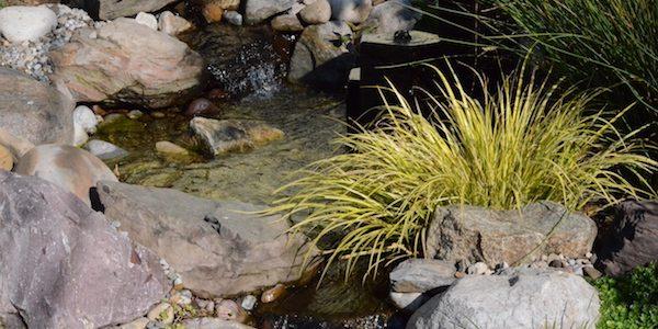 Bog garden water feature