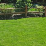 Irrigated lawn