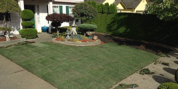 Homeadvisor S Guide To Laying Sod Properly