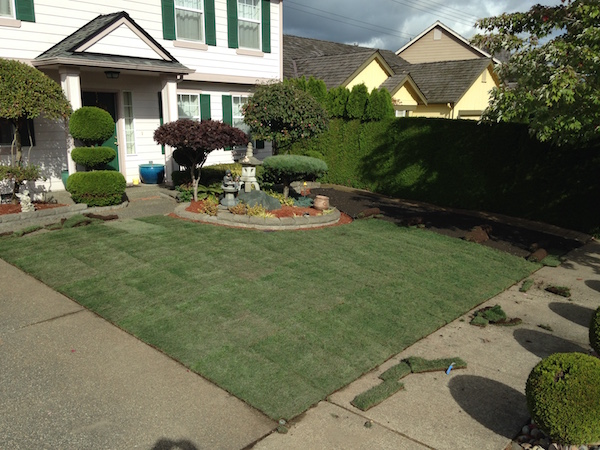 Front yard made of sod