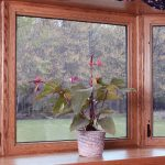 Wood framed windows