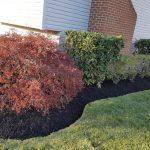Garden bushes