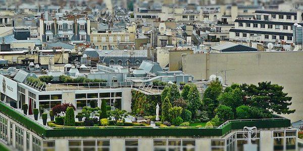 Roof Garden In A City