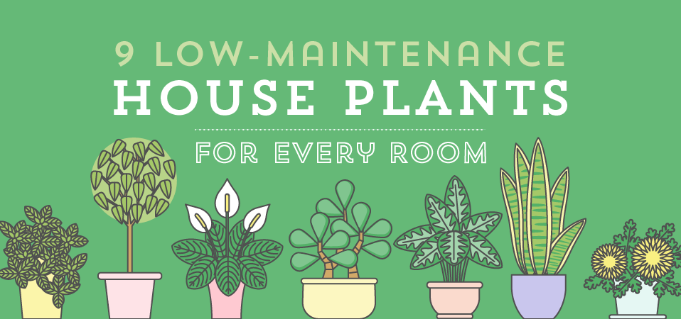 Low Maintenance House Plants Banner