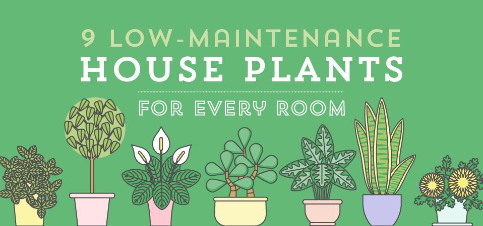 Low Maintenance House Plants Banner