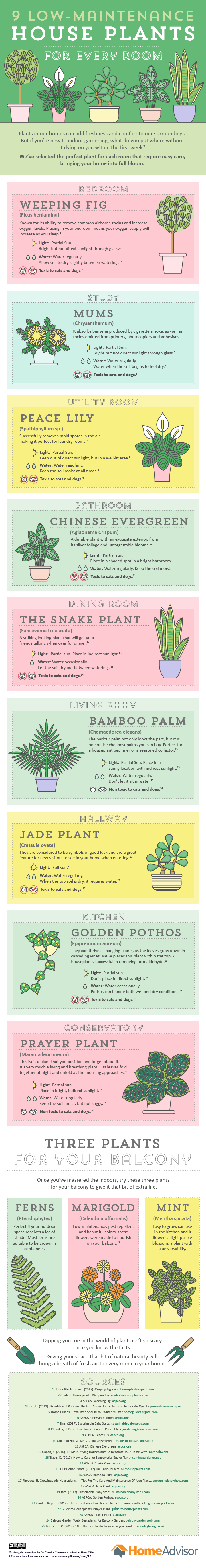 9 Low Maintenance House Plants For Every Room Homeadvisor House
