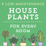 9 Low-Maintenance House Plants for Every Room