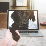 4 Smart Home Hacks for the Pet Lover