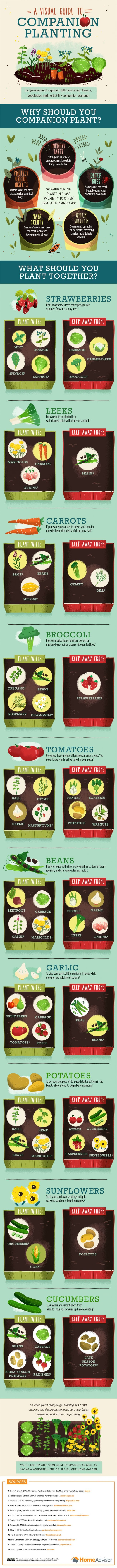 10 Companion Planting Tips & Guide