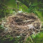 An empty birds nest