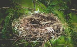 An empty birds nest