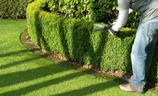 yard and garden worker trims hedges