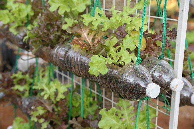 Growing A Stunning Vertical Garden Homeadvisor