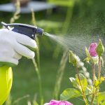 Gardening Hacks to Protect and Nourish Your Plants
