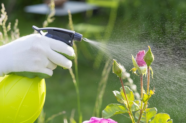 Woman spraying flowers in the garden.