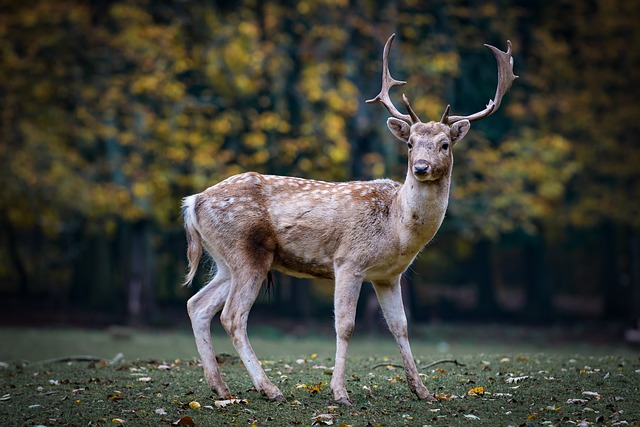 Deer standing at the edge of the woods