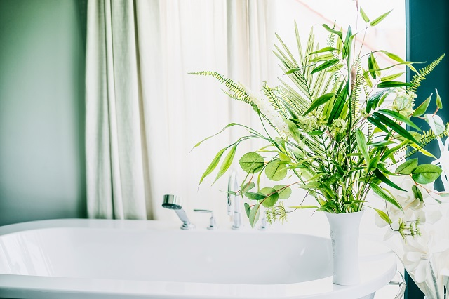 Green indoor plants in vase in bathroom  , home interior concept