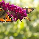 How to Build a Butterfly Garden in Your Backyard