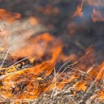 Close up picture of dry grass burning up