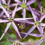 Lawn Care: Flower Identification Guide