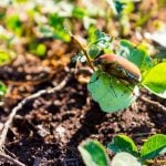 A Lawn Guide to Insect and Bug Identification