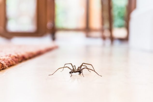 Spider Pest Control Best Tips And Products