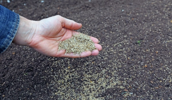 hand holding and dropping grass seed into dirt